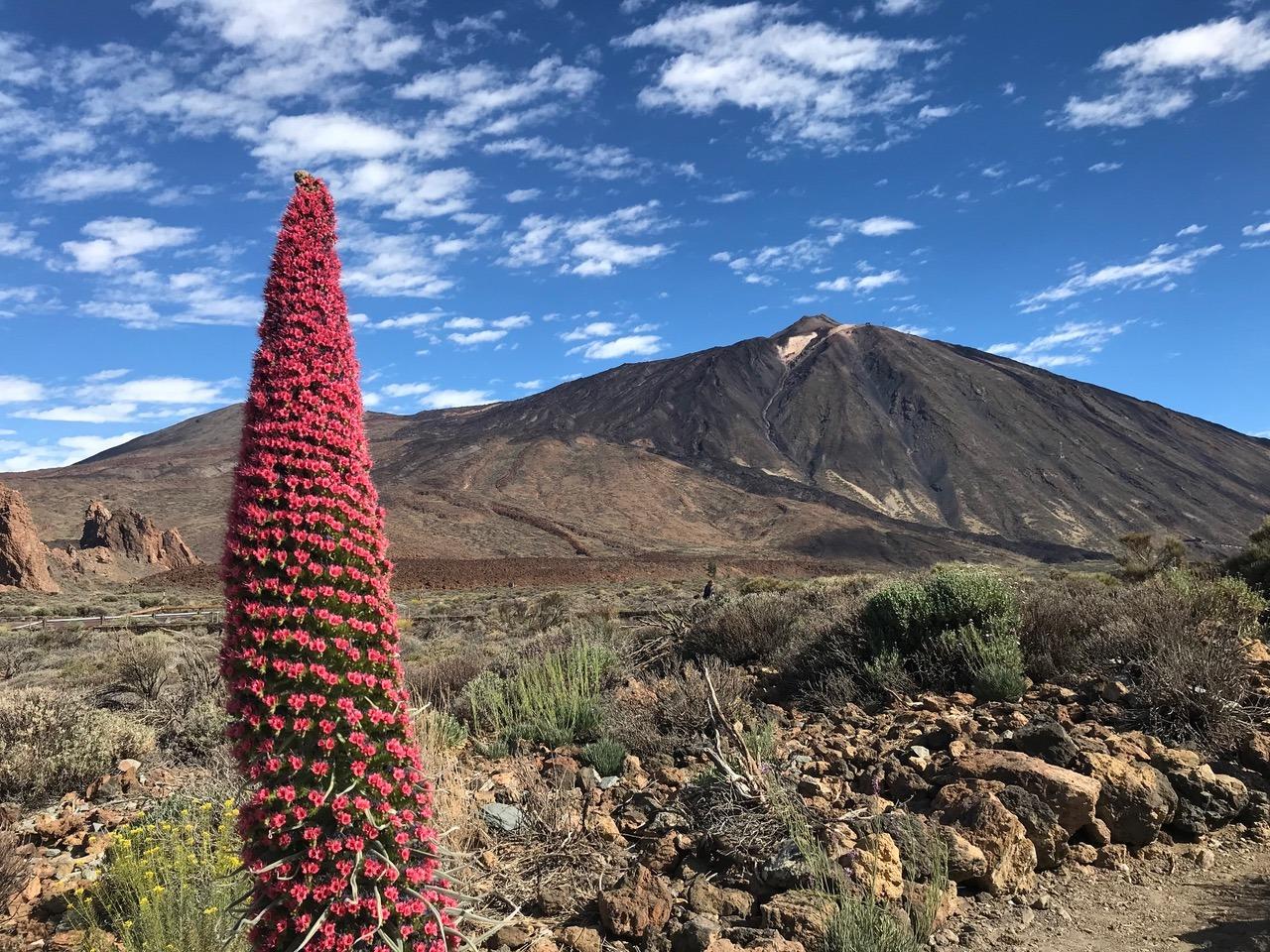 Emigreren naar Tenerife?