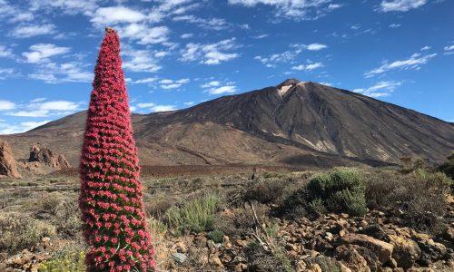Emigreren naar Tenerife